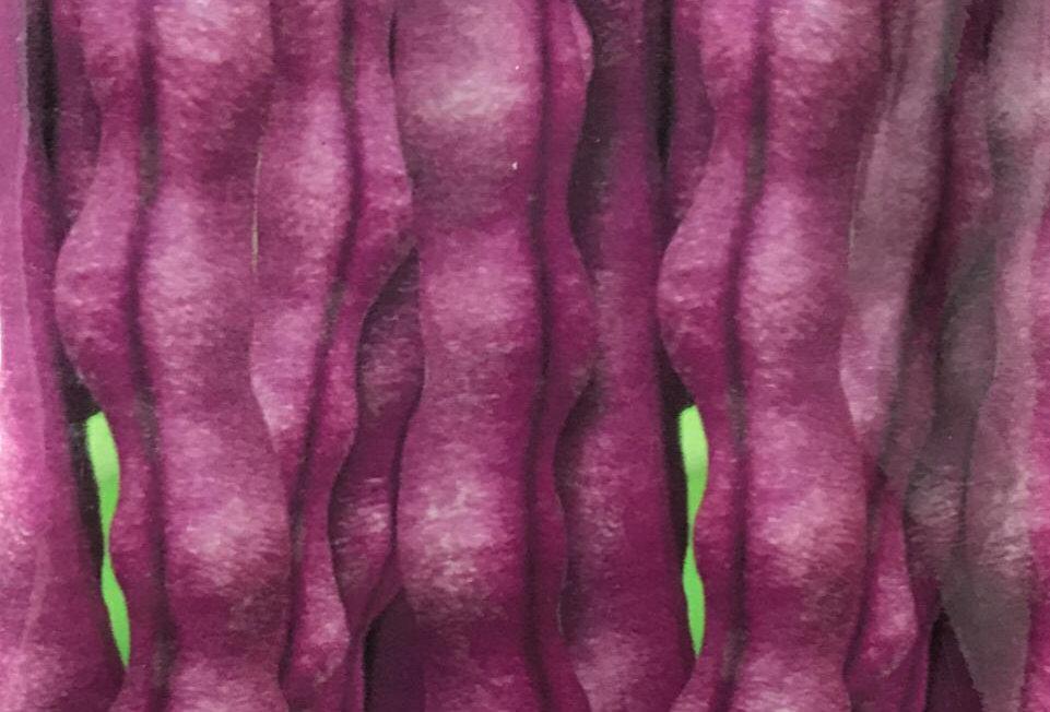 SB066 - Vegetable Seed  Bean
