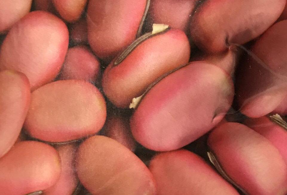 SB062 - Vegetable Seed  Knifebean