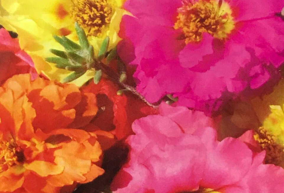 FA022 - Flower Seed  Sun Plant