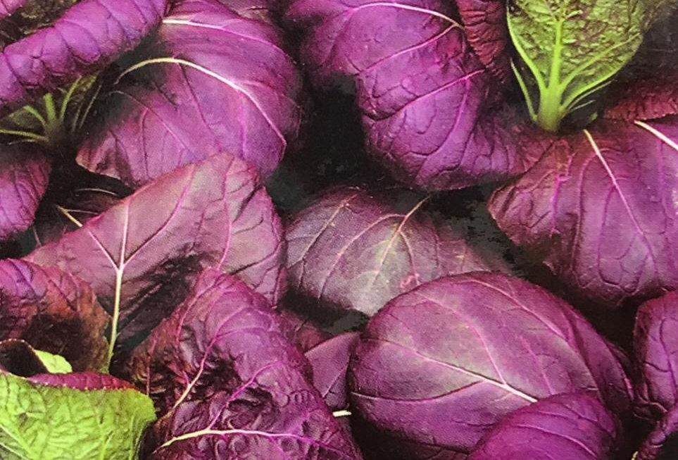 SC140- Vegetable Seed    Rape