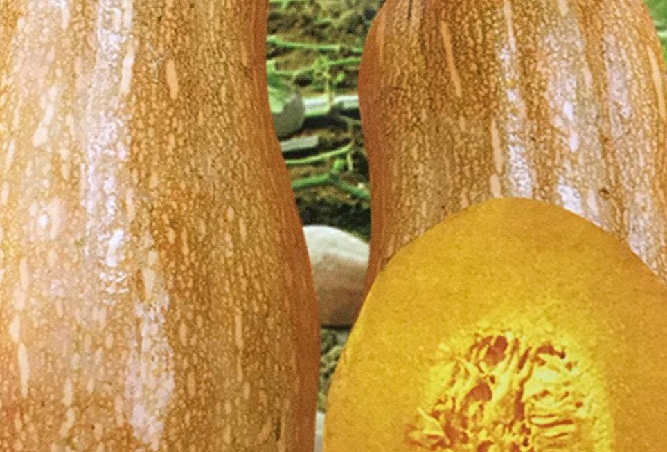 SC044 - Vegetable Seed   Pumpkin