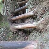 treehouses1.jpg
