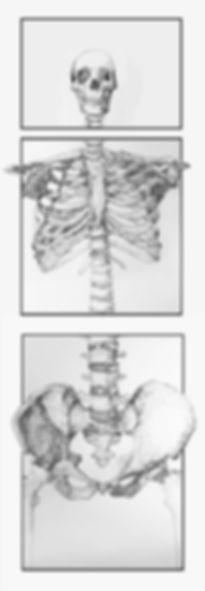 Anatomy Export.jpg