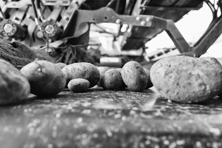Barts potato-2.jpg
