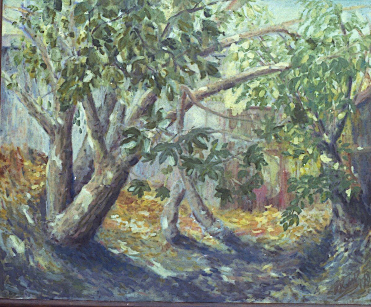 Backyard Fig Trees