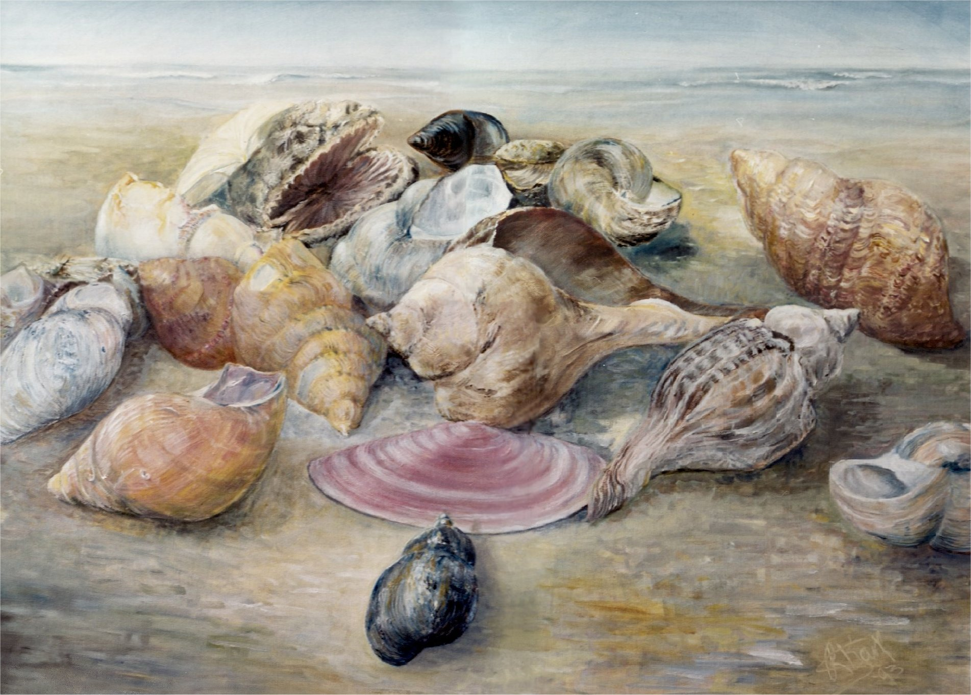 Seashells on the Seashore