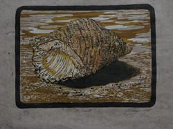A Shell