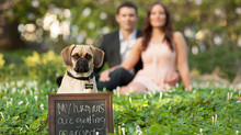 Creative Engagement Announcements