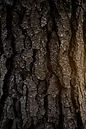 full-frame-shot-tree-bark.jpg