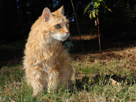 Recognizing pain in your senior dog or cat