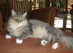 Mobile Vet Bend Euthanasia Cat Dog 5
