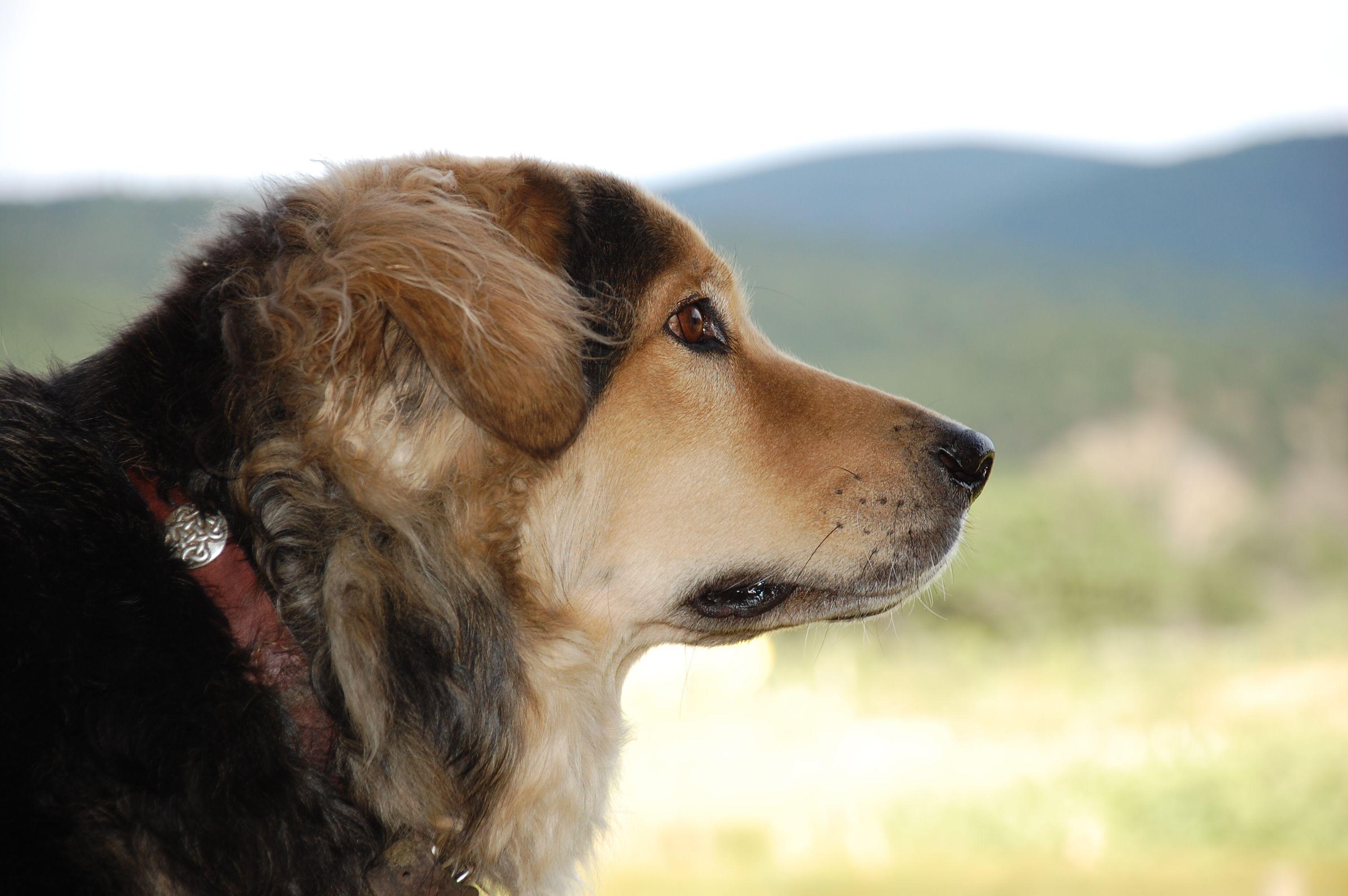 Mobile Vet Bend Euthanasia Cat Dog 9