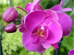 orquídias.jpg