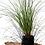 Thumbnail: Green Carex