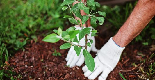 plant removal.jpg
