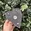 Thumbnail: Ouija Planchette Trinket Box