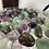 Thumbnail: Fluorite Tumble Stone