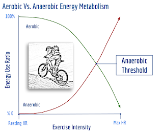 Aerobic vs. Anaerobic 2.png