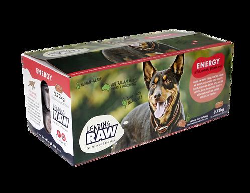 Dog Leading Raw - Energy
