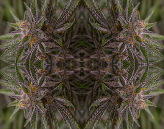 710labs_goldenstrawberry_4up.png