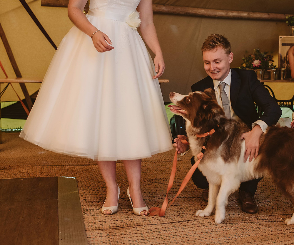 Red and white border collie wearing a bow tie, stands next to a bride