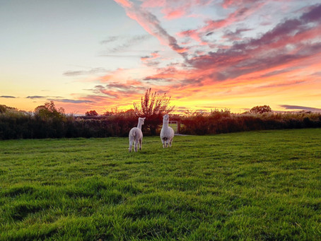 What happens on a smallholding in Derbyshire in autumn?