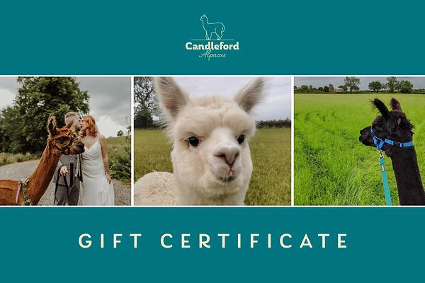 Family Gift Certificate