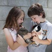 Pets_Angela Scott (2) copy.jpg