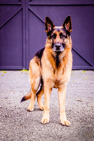 Pets_Angela Scott (84).jpg