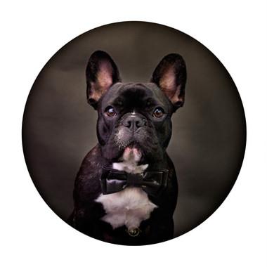 Pets_Angela Scott (6).jpg
