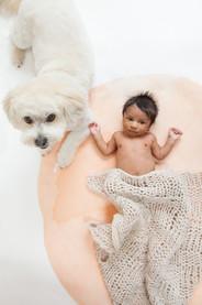 Pets_Angela Scott Photographers-5727.jpg