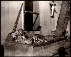 Buck & Greta's Pups