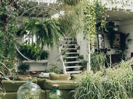Biophilia. Is this really a NEW trend in interior design?