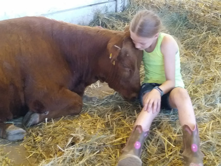 The Reality of Farm Life