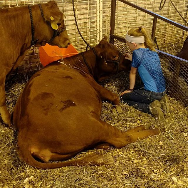 Mack has a new heifer, her name is Hazel. She's in love with her