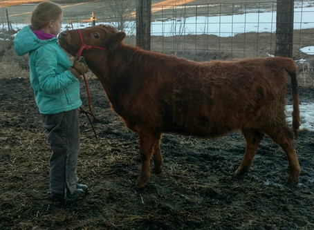 Kids, Cattle, and Cookin'