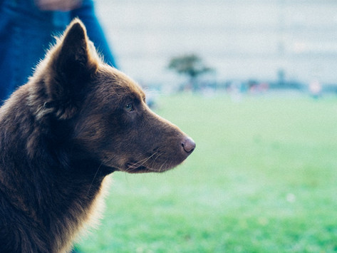 Liste de critères et réflexions pour adopter un animal de manière réfléchie