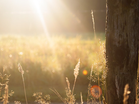 La vitamine D : pour qui et pour quoi?