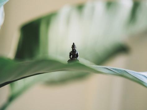 Pratiquer la pleine conscience grâce à Petit Bambou