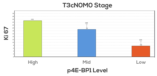 Patients at stage T3cN0M0 and high levels of expression of p4E-BP1 show a higher index of Ki67 than those with low/mid levels of expression. This relationship supports the idea that mTOR signalling way has a relevant role in the tumoral growth.