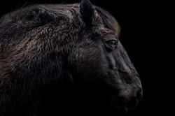 Hothfield pony