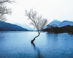 lone tree creative