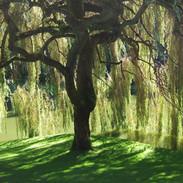 Willow Brook.jpg