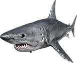 shark_PNG18812.png