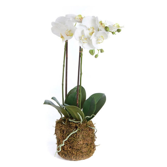 23 inch tall artificial orchid plant in white with an attached root ball