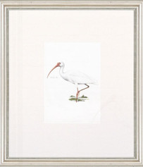 Petite Bird Print - White Ibis