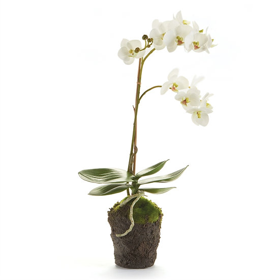 17 inch tall artificial orchid plant in white with root ball