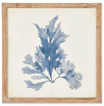 Blue Coral IV