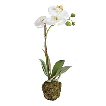 15 inch tall artificial orchid plant in white with an attached root ball
