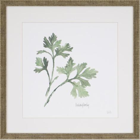 Watercolor Herb Print - Parsley